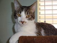 Papa Prince's story The adoption fee is $85.00 with an