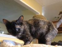 Papaya is an gorgeous and sweet little girl with