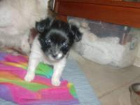 "Our precious little ""Josette"" is VERY lovable! She will"