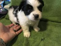 Now taking deposit on this beautiful little girl... she