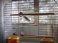 I have a blue parakeet for adoption, ($125.00) who