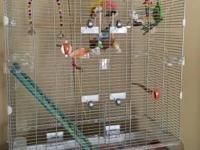 Two parakeets. One male. One female. One is more shy