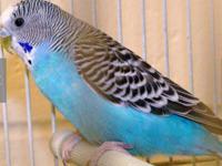 sale on parakeets $9.95.. reg price $14.95 Blacksmith's
