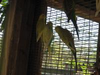 Rescue has 4 parakeets- M, looking for there new,