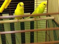 I have a set of parakeets. cage and net to keep floor