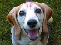 PARKER's story Parker is a 13 year old male Beagle. As
