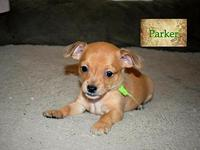 Parker's story This little guy is Parker.. 13 weeks of