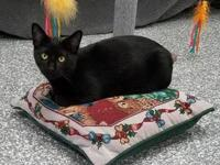 "Parker's story Parker is a ""mini panther "" - sleek and"