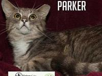 Parker's story   Come meet me at the cage-free