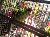 Macaw parrot Comes with perch,cage,pellet