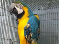 OVERSTOCKED NEED TO SELL SOME PARROTS. YELLOW NAPE
