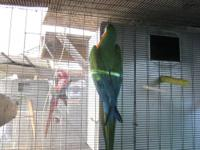 i have a very large macaw cage 7 foot high 32 inches