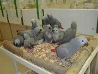 We are breeders of birds/parrots and we sell very