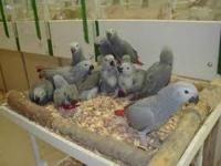 We have parrots and fresh laid parrot eggs available,
