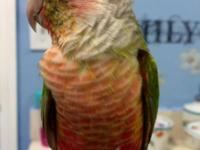 Available for rehome are the following parrots:. One