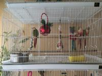 For sale or trade: conures with cages and all devices