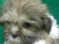 SHIH TZUS ARE AN AMAZING BREED. THEY HAVE A LOT OF LOVE