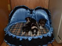 Born July 18 they are 4 weeks old and taking deposit on