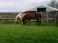 I have an 8yr old Dunalino Paint mare and a 12 yr old