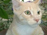 Partridge's story Partridge is a domestic shorthaired