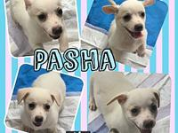 Pasha's story Baby Pasha! Check out her cute little