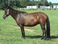 Paso Fino - Black Beauty - Large - Adult - Female -