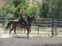 Beautiful light bay paso gelding. He's big at 15 hands,