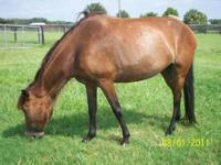 Mares, fillies, colts at good prices. The best