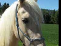 Alita is a Beautiful 8 year old Reg Palomino Paso Fino