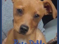 Hi, I'm Paso Doble! I'm about 14 weeks old and I'm a