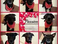 Passion is a 5 year old sweetheart.  It just doesn't
