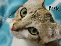Pastel's story The adoption fee is $85.00 with an