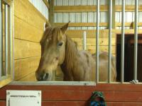 We have several companion horses available for foster