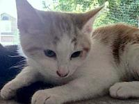 Pat's story BONDED PAIR! Pat is a sweet little boy. He