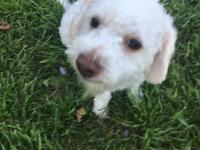 Pat is a 4 yo male Poodle mix. He's very friendly and