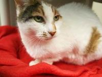 Patch's story Patch is a 13-year old Calico girl and is