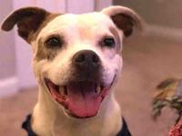 PATCHES's story Meet Patches! Patches is a very loving,