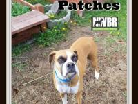 Patches  6 yo Female  Fawn  62 pounds  Kid & Dog