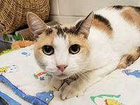 Patches's story Patches is a shy girl needing a patient