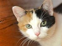 Patches's story The Calico Gal Gang is here----just