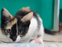 Patches's story Fixed, vaccinated, microchipped,