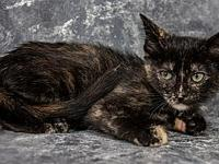 My story Primary Color: Black Tortoiseshell Weight: