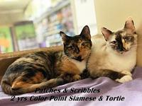 Patches's story Patches is a friendly sweet Tortie who