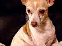 Patches (Fostered in TN)'s story Angels Among Us Animal