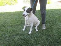PATCHES's story 18-29424 / KENNEL 17 / WEIGHT 46.18 /