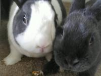 Patches and Maisie are an adorable, bonded pair.