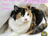 Patches's story You can fill out an adoption