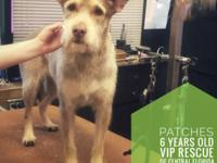 Meet Patches!  Patches is a 6 years old Terrier Mix