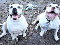 Patches & Titus's story Patches and Titus are a bonded