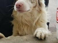 Patrick is a 2 year old Aussie. He is very playful and
